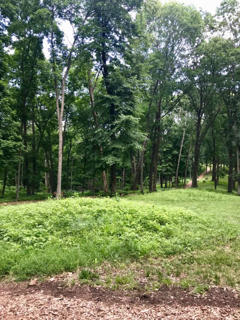 Earthen mounds at Effigy Mounds National Monument in Iowa
