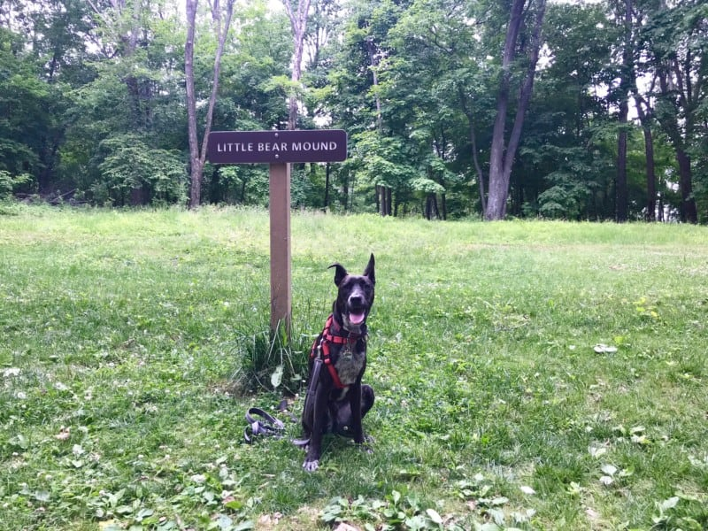 Brindle dog at Little Bear Mound in Effigy Mounds National Monument, Iowa