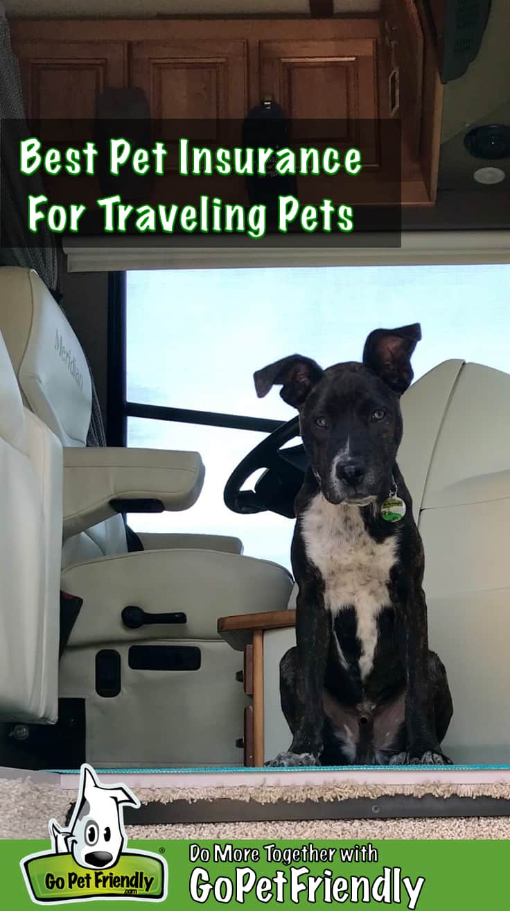 Brindle and white puppy sitting in the doorway of a motorhome