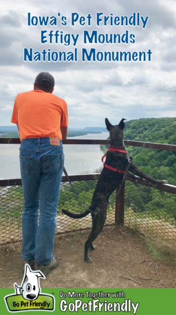 Man and dog overlooking the Mississippi River from pet friendly Effigy Mounds National Monument in Iowa