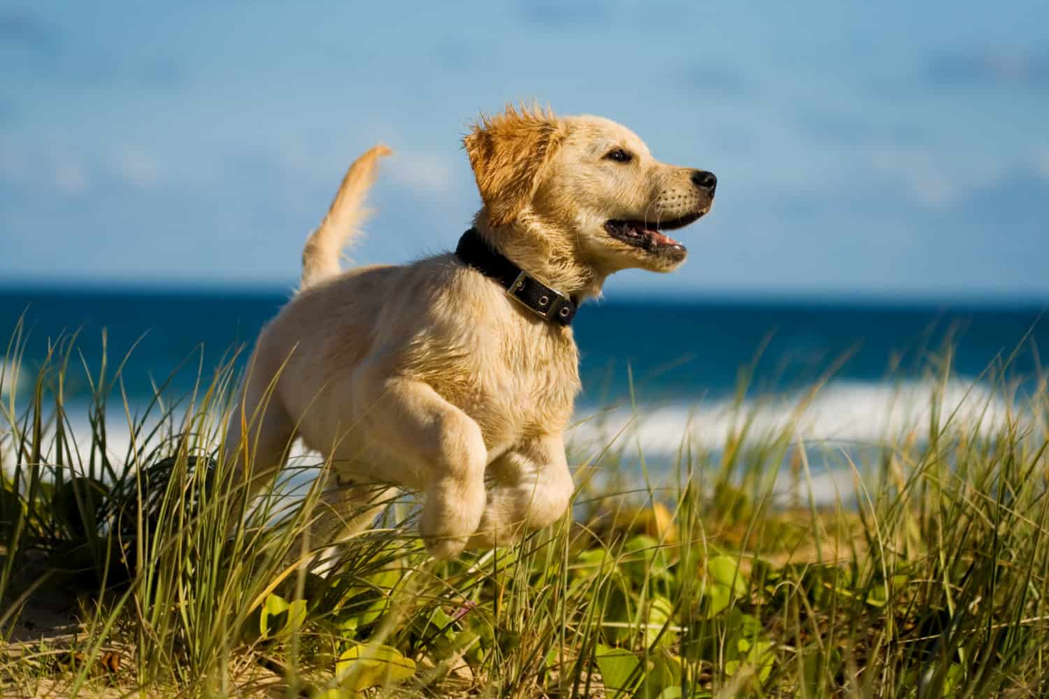 Keep Your Dog Safe At The Beach Gopetfriendly