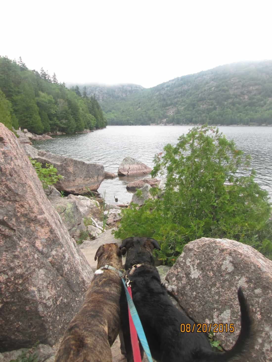 Dogs in New England at Jordan Pond in pet friendly Acadia National Park, ME