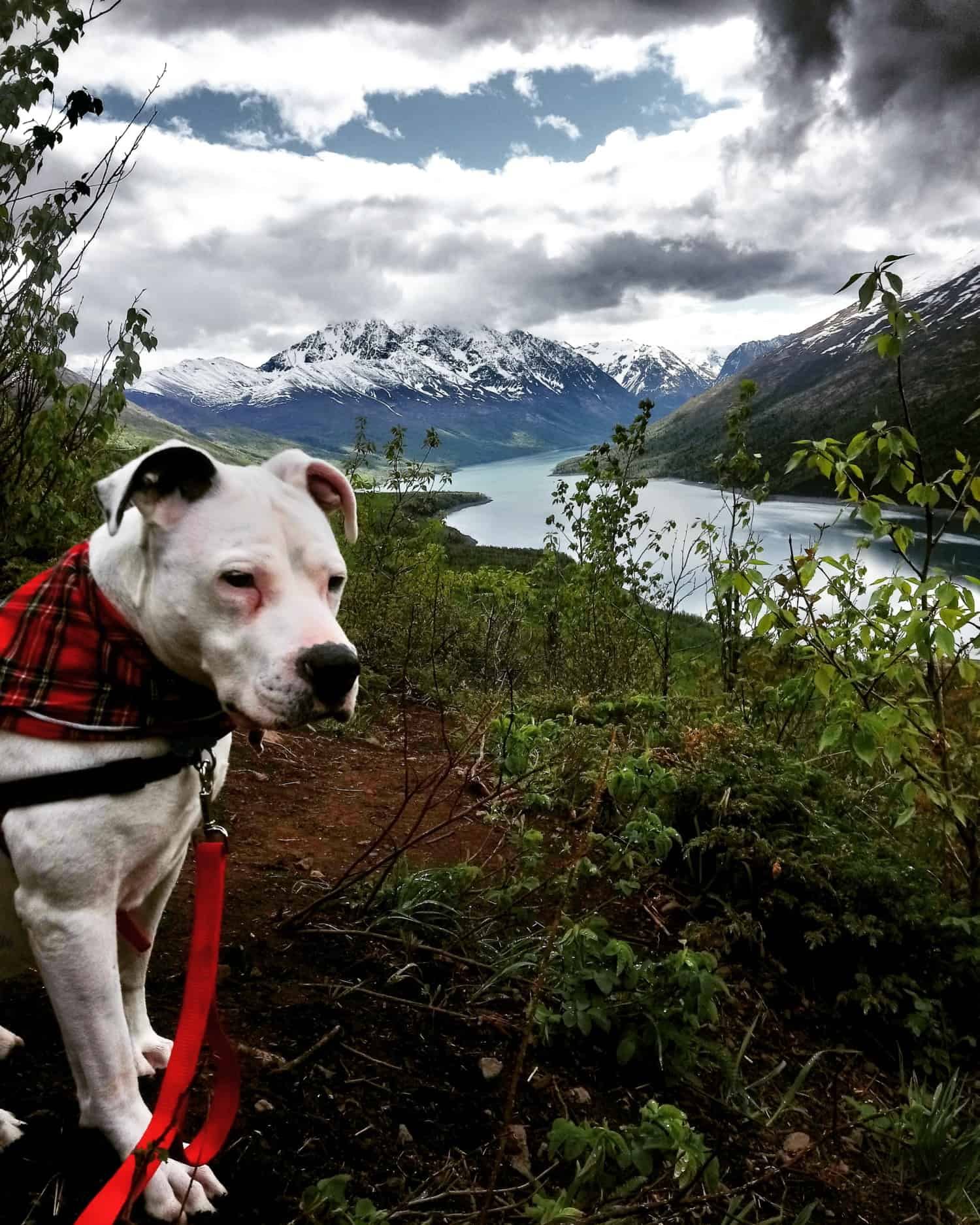 White dog sitting on a pet friendly trail with a snow covered mountain in the background