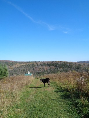 Dog on a pet friendly trail at Dog Mountain in St. Johnsbury, VT