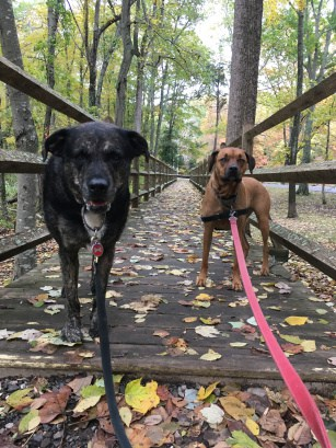 Dogs on a pet friendly trail in Gillette Castle State Park in MA