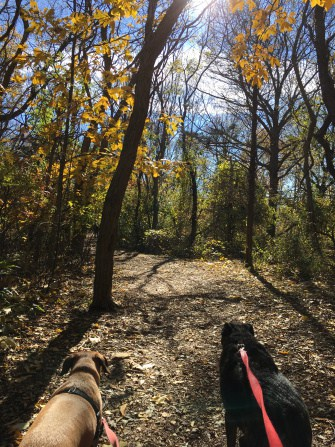 Dogs in New England on a pet friendly trail at Halibut Point State Park, MA