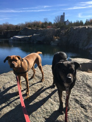 Dogs in New England at pet friendly at Halibut Point State Park, MA