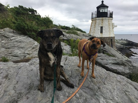 Dogs at a pet friendly lighthouse in New England