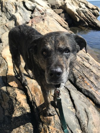 Dog in New England at pet friendly Wolfe's Neck Woods State Park in ME