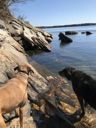 Dogs in New England at pet friendly Wolf's Neck Woods State Park in ME