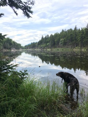 Dog at a lake in the White Mountains, NH