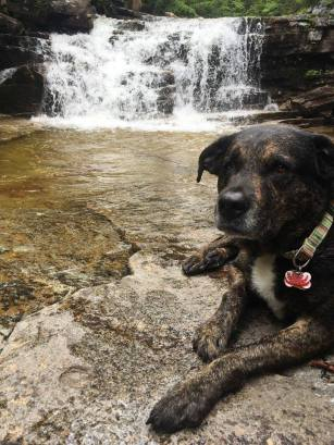 Dog by a waterfall in the White Mountains, NH