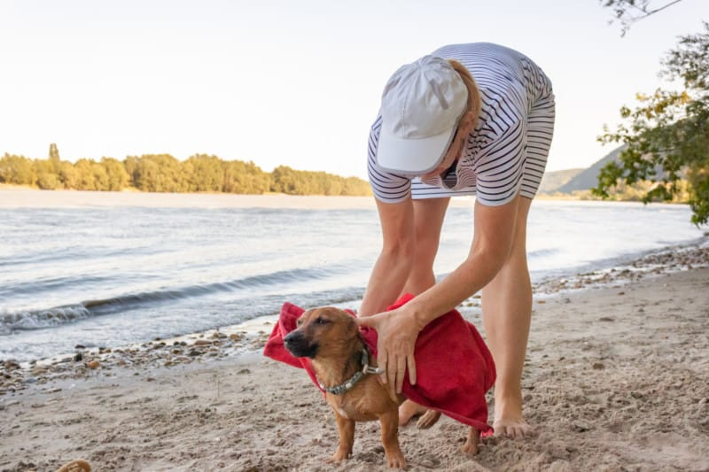 Woman drying her small mixed breed dog at the river beach with a towel.