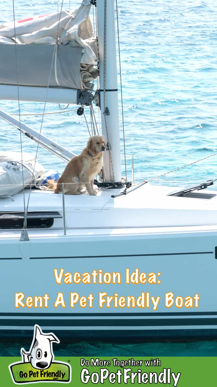 Golden Retriever dog sitting under the mast of a large sailboat at sea