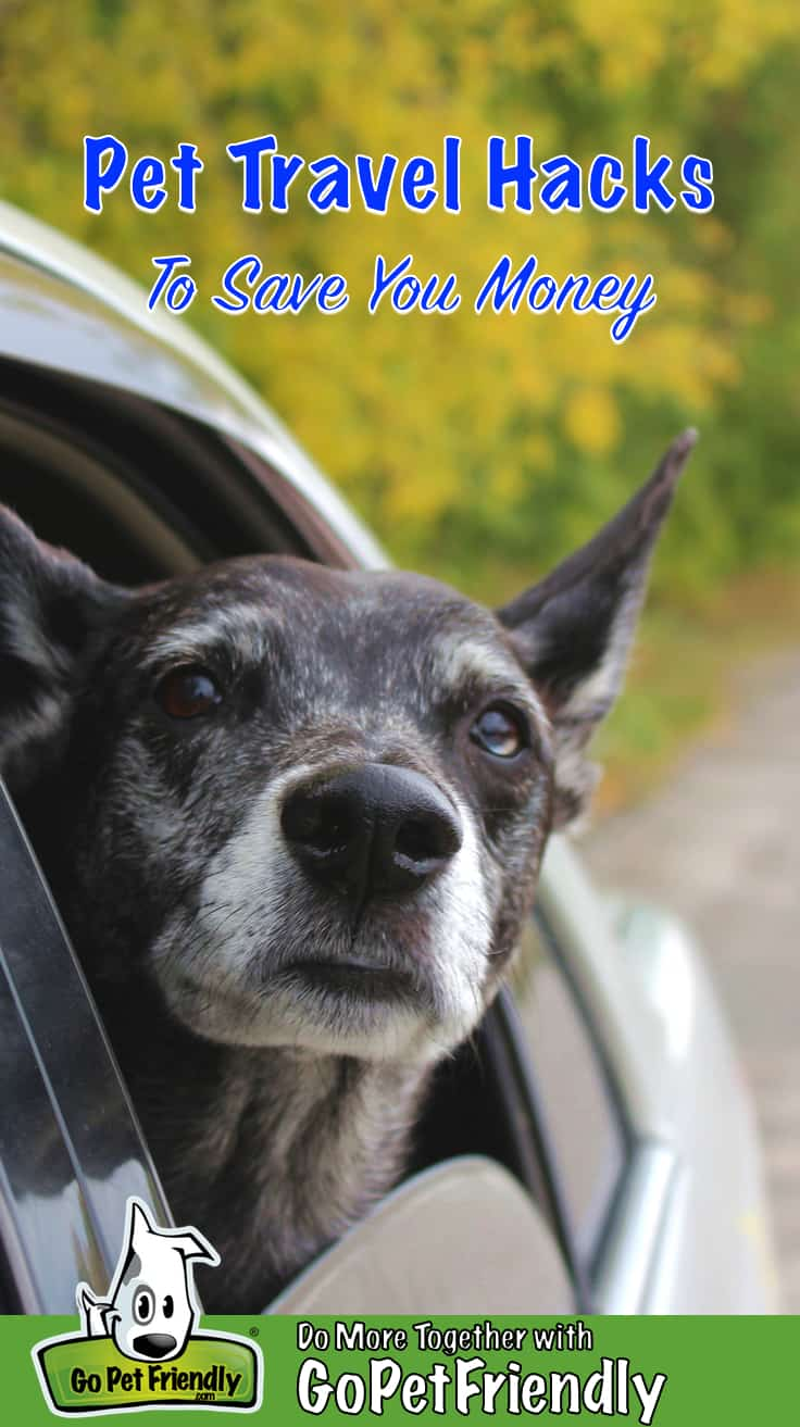 """Elderly dog looking out a car window with the text """"Pet Travel Hacks To Save You Money"""""""