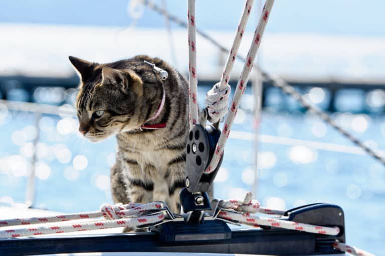 Cat on sailboat on a pet friendly boat tour