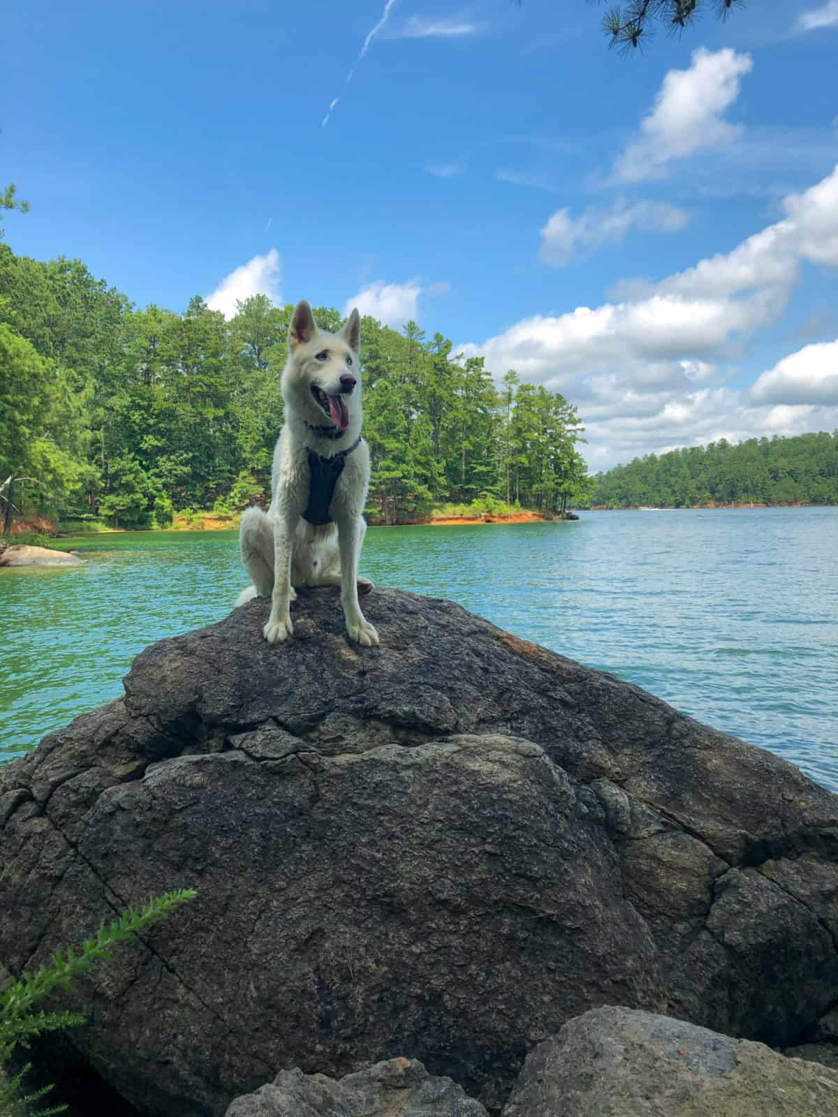 Finding a pet friendly vacation property or cabin might make the perfect trip. These tips will help you choose a place for you and your pet.