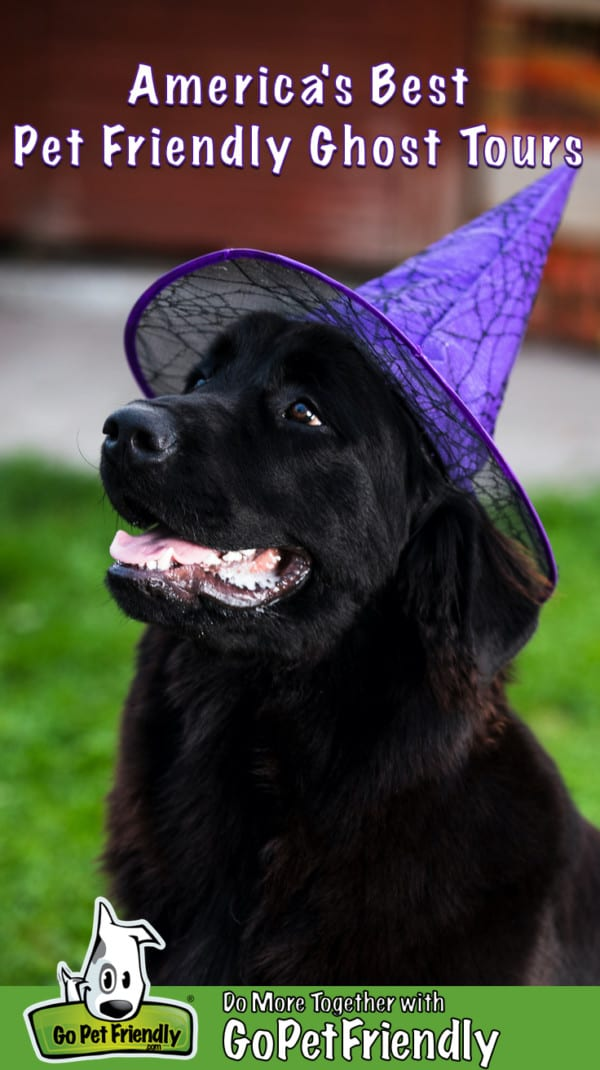 Smiling black dog in purple witch's hat