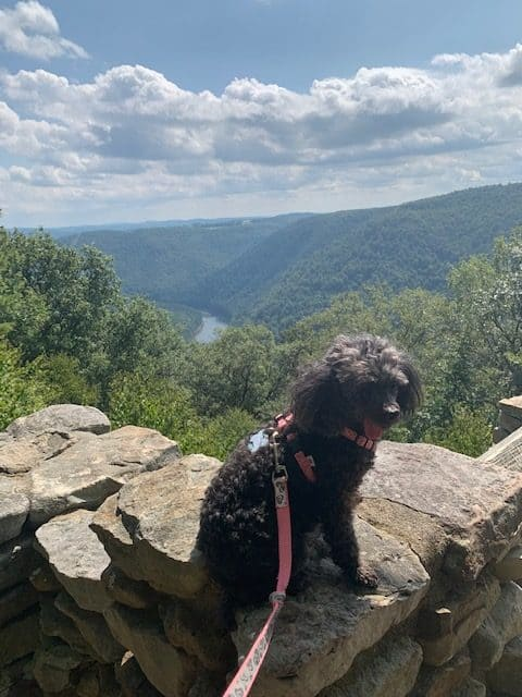 Small grey rescue dog sitting on a rock with a mountain landscape in the background