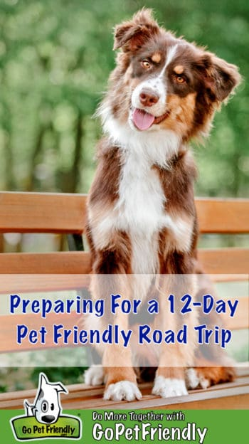 Smiling brown and white Australian Shepherd Dog sitting on a park bench on a pet friendly trip