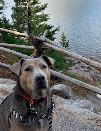 Dog sitting on a path next to a mountain lake