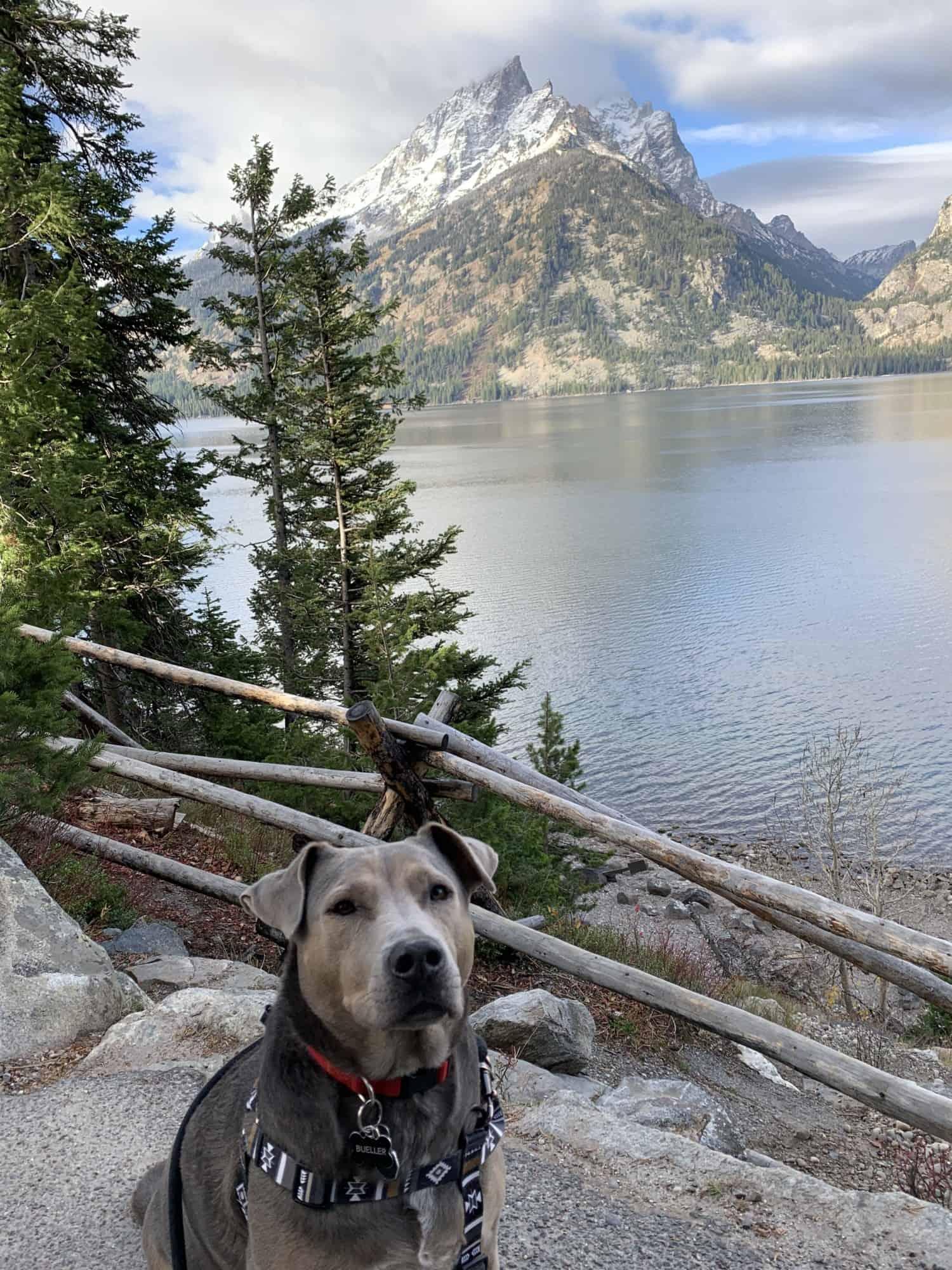 Dog sitting on a path next to a mountain lake