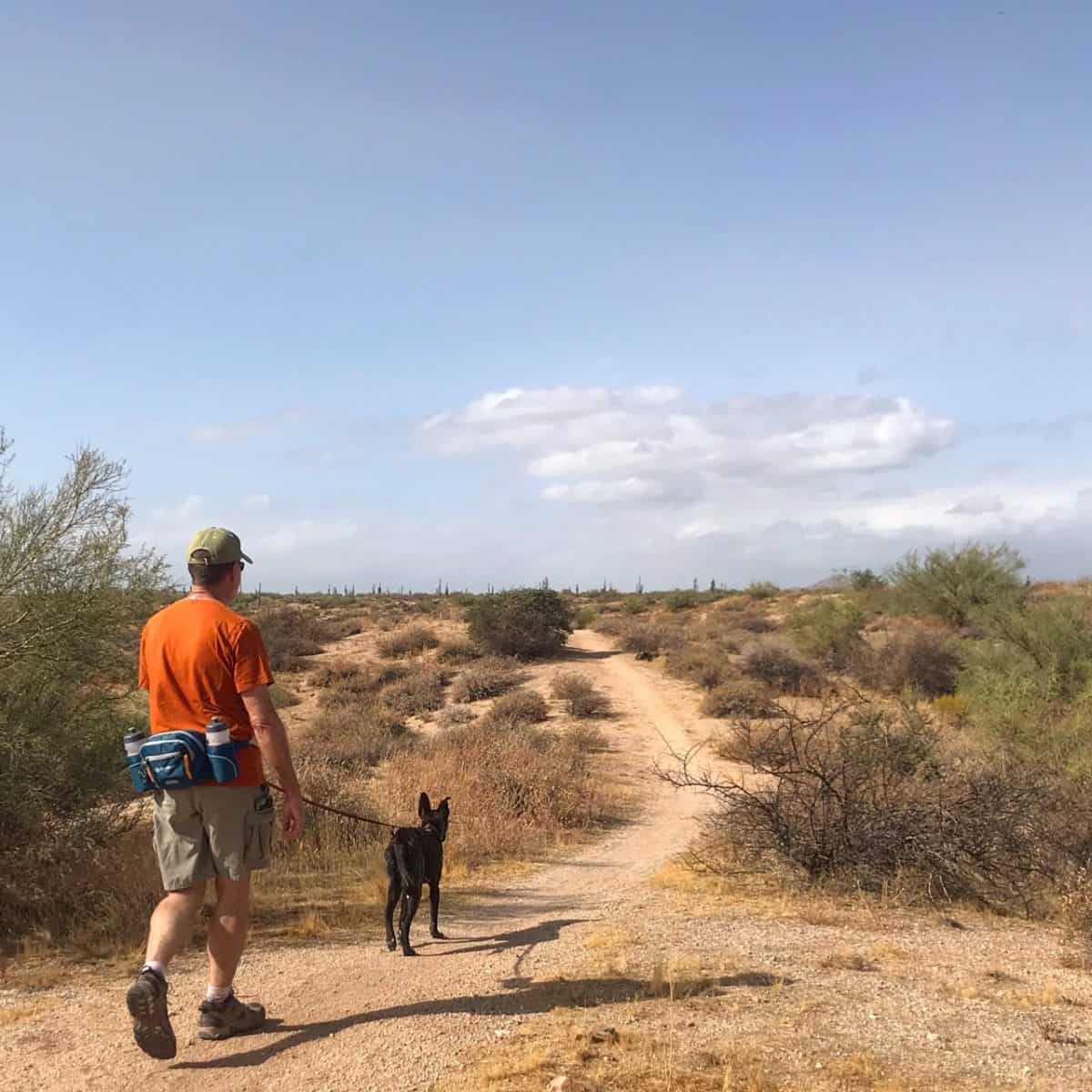 Pet Friendly Camping Near Phoenix – McDowell Mountain Regional Park