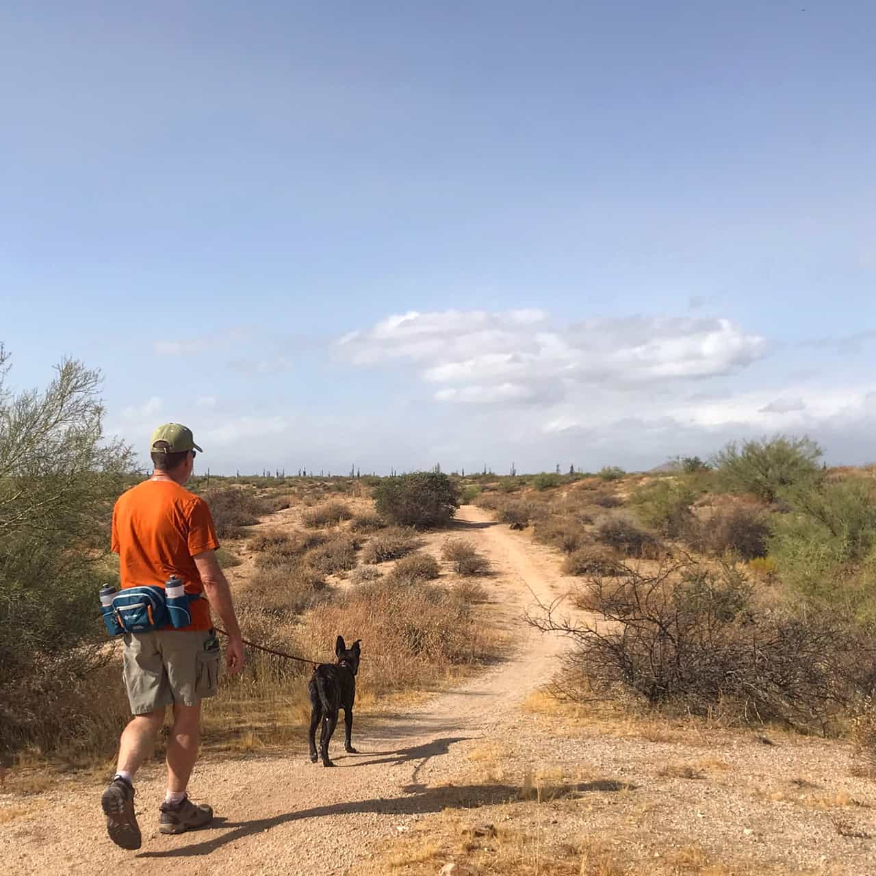 Pet Friendly Camping Near Phoenix - McDowell Mountain Regional Park