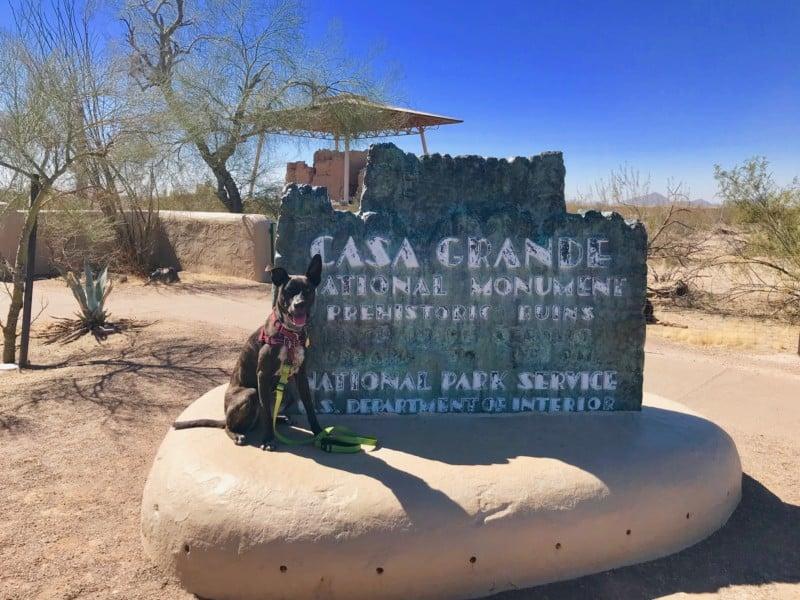Brindle dog sitting beside the Casa Grande sign near Tucson, AZ