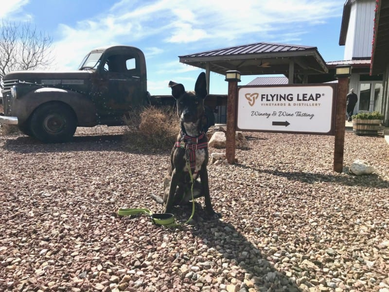 Brindle dog posing with a sign at the dog friendly Flying Leap Winery near Tucson, AZ