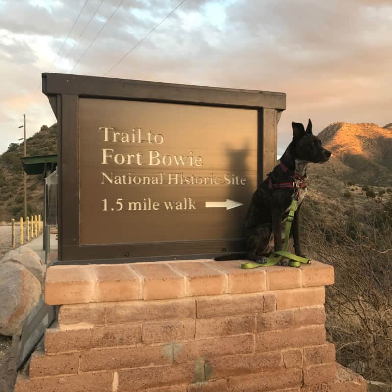 Brindle dog sitting next to a sign for Fort Bowie National Historic Site near Tucson, AZ