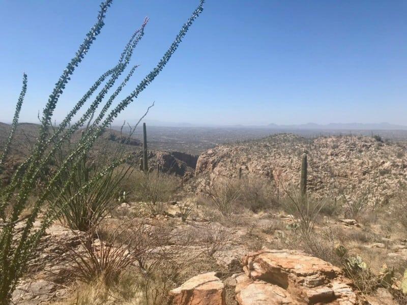 View from the dog friendly Auga Caliente Trail near Tucson, AZ