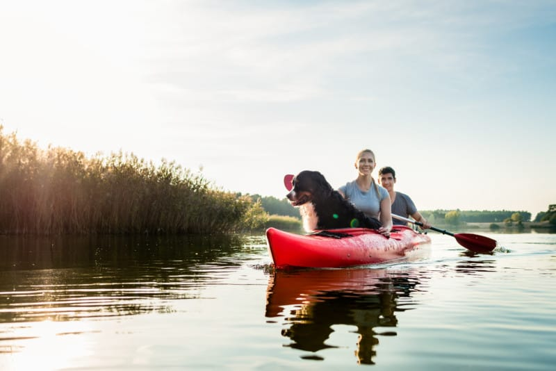 Dog and woman sitting with a man kayaking