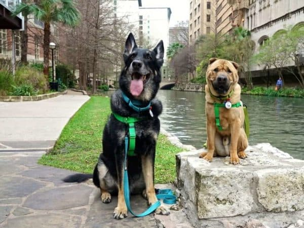 Pet Friendly San Antonio: Exploring The River Walk
