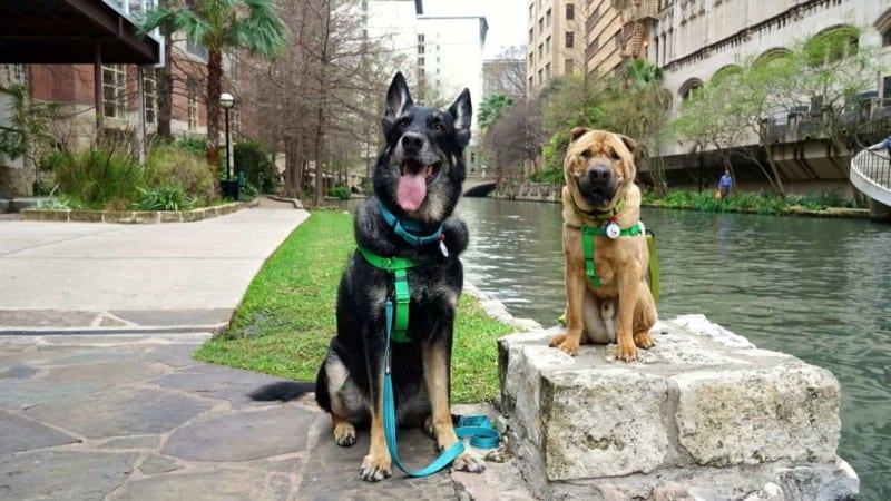 Pet Friendly San Antonio: Exploring The River Walk