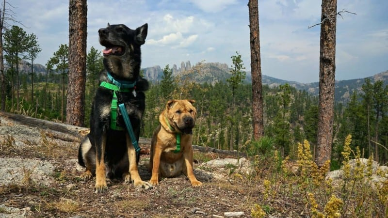 Pet Friendly Custer State Park in South Dakota