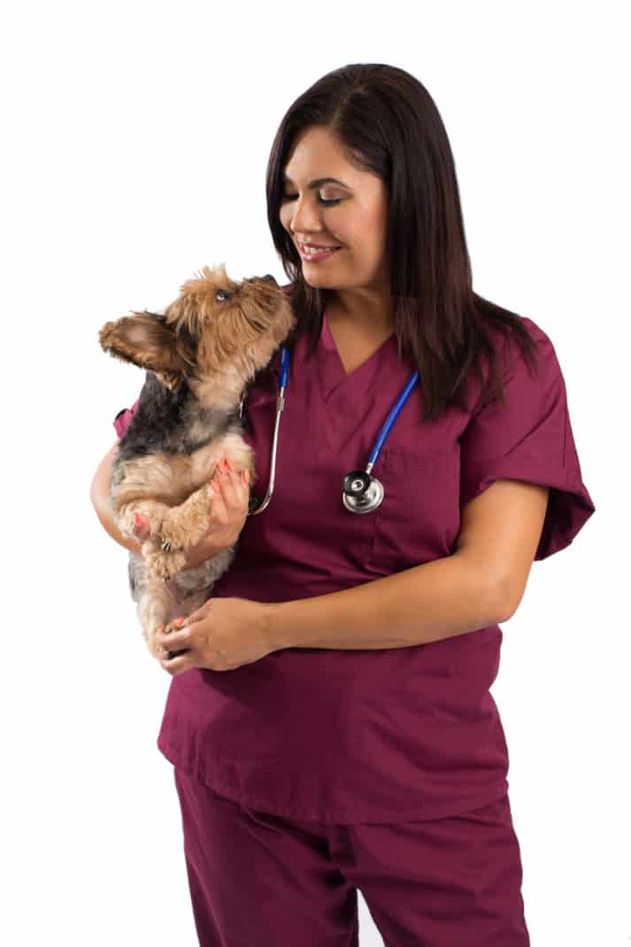 Veterinarian woman holding a Yorkshire Terrier dog