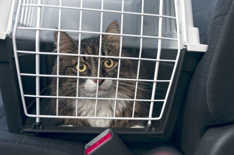Tabby cat in a carrier in a pet friendly rental car