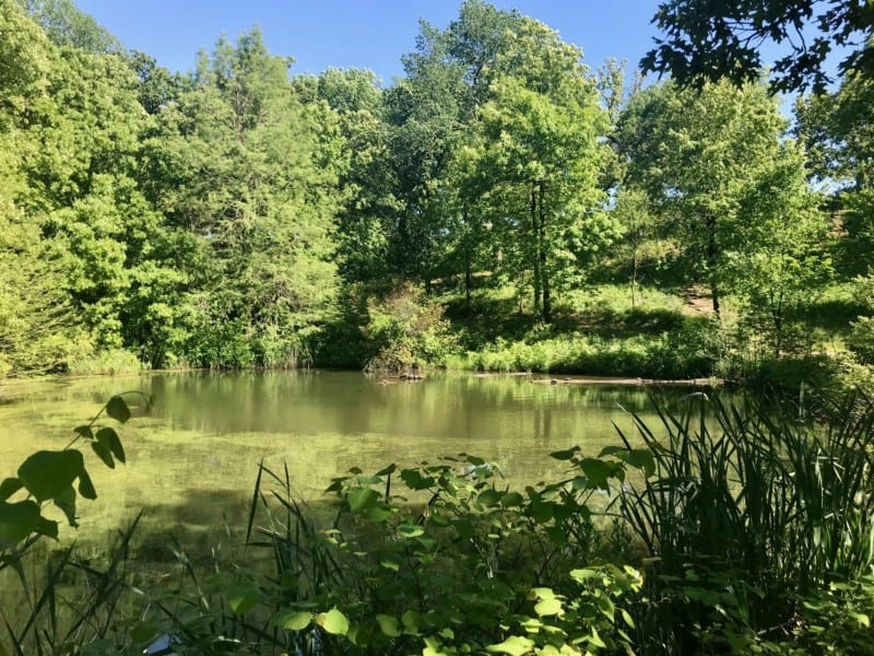Turtles in a pond at Stuart Park in Tulsa, OK