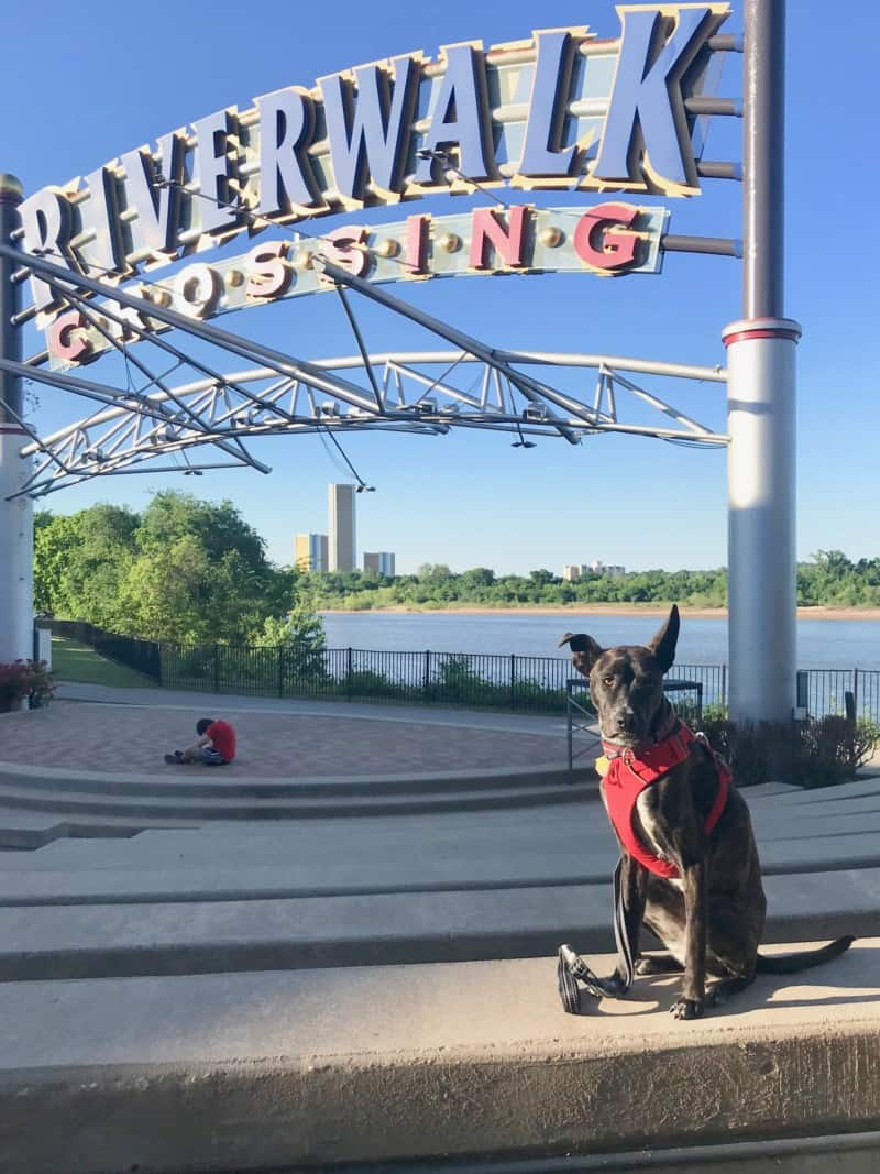Brindle dog in red harness in front of RiverWalk Crossing sign in Tulsa, OK
