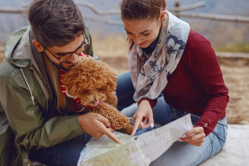 Happy couple looking at map with small brown dog