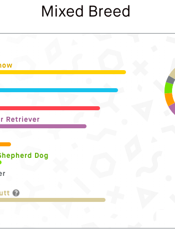 Embark Dog DNA Test results for Myles
