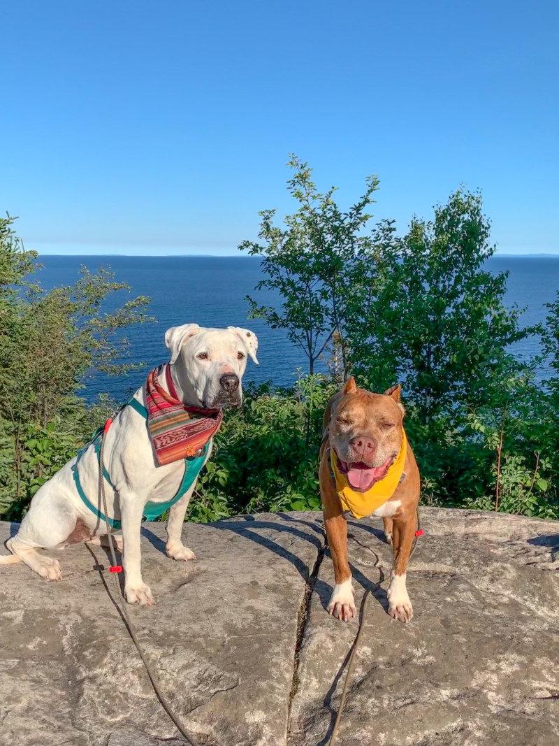 Pet Friendly Split Rock Lighthouse State Park