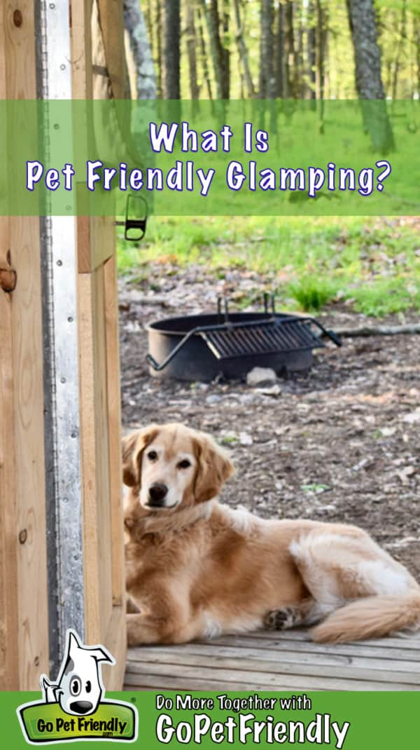 Golden Retriever on the porch on a pet friendly glamping trip