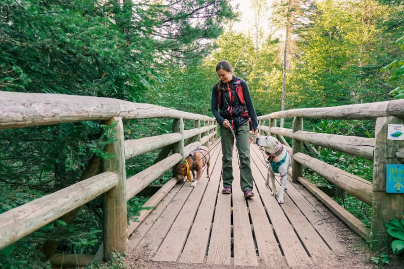 A brown dog, a woman, and a white dog cross a wooden bridge in a forest in Cascade River State Park on the North Shore in Minnesota