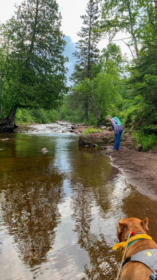A brown dog looks out over a calm river and a woman is in the background along with many trees at Caribou Falls State Wayside on the North Shore in Minnesota.