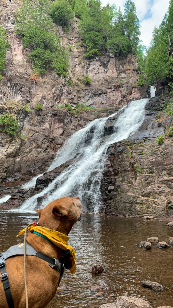 A handsome brown dog admires a waterfall at Caribou Falls State Wayside on the North Shore in Minnesota.