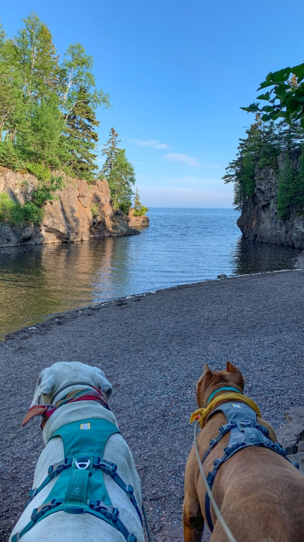 A white dog and a brown dog in front of the mouth of a river flanked by rocky cliffs and pine trees at Temperance River State Park on the North Shore in Minnesota.