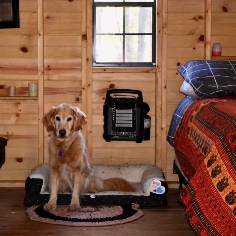 Pet friendly glamping hut