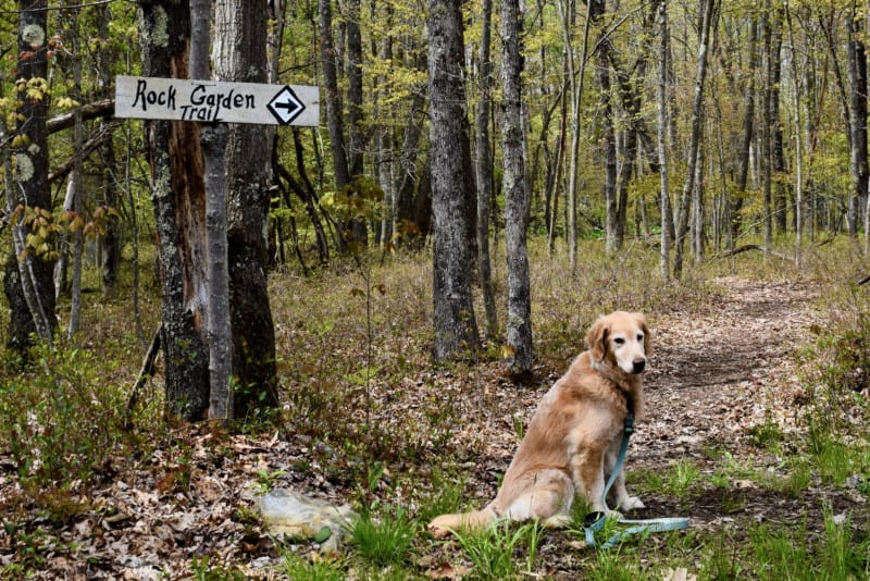Hiking at pet friendly glamping site - Wild Yough